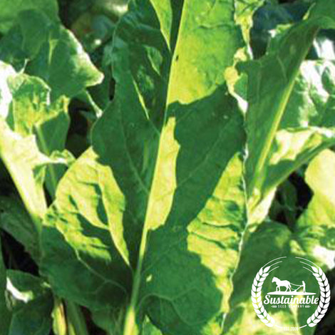 Perpetual Spinach Chard Seeds - Non-GMO