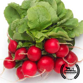 Organic Cherry Belle Radish Seeds