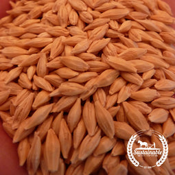 Organic Common Grain Barley Seeds