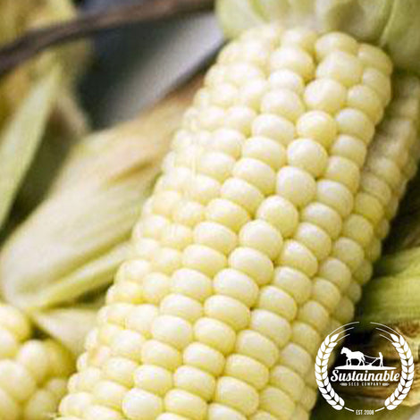 Stowell's Evergreen Sweet Corn Seeds - Non-GMO
