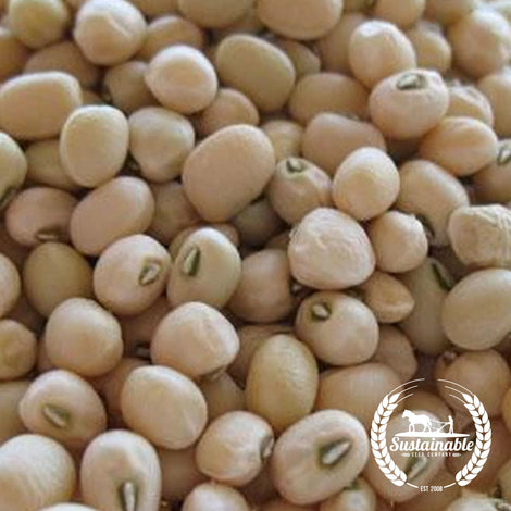 Cowpea Early Lady Garden Seeds