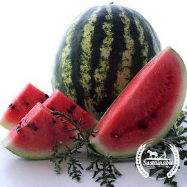 Organic Crimson Sweet Watermelon Seeds