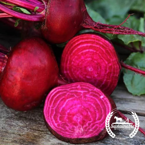 Crosby Egyptian Beet Seeds