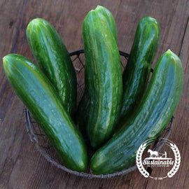 Muncher Burpless Cucumber Seeds