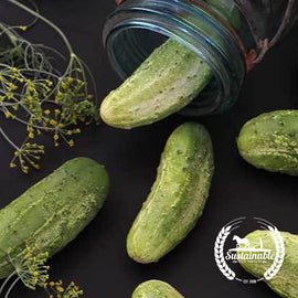 Wisconsin SMR-58 Pickling Cucumber Seeds