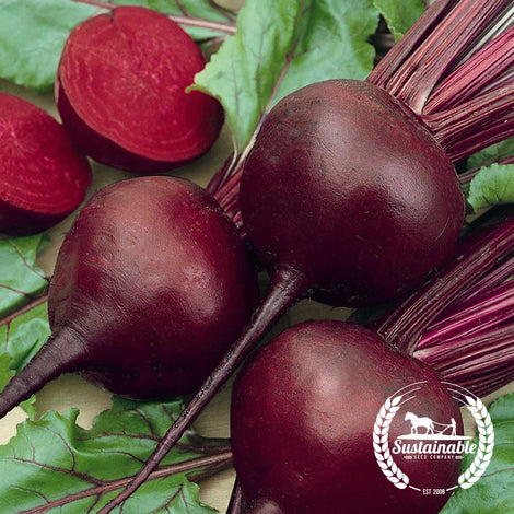 Organic Detroit Dark Red Beet Seeds