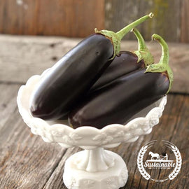 Diamond Eggplant Garden Seeds