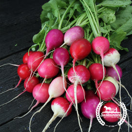 Organic Easter Egg Radish Seeds