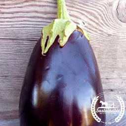 Organic Black Beauty Eggplant Garden Seeds