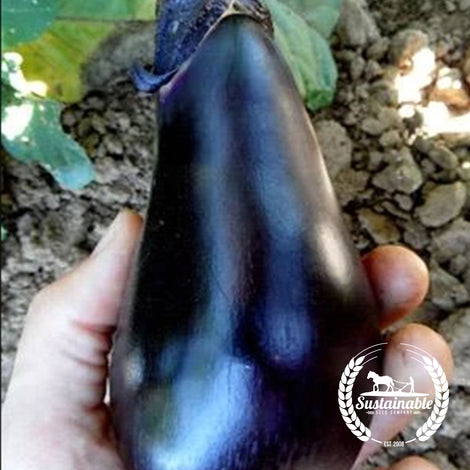 Black Egg Eggplant Seeds