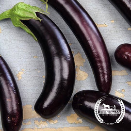 Little Finger Purple Eggplant Seeds