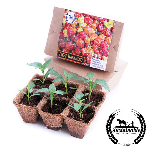 Fiery Habanero 6 Pack Seed Starter Kit Growing