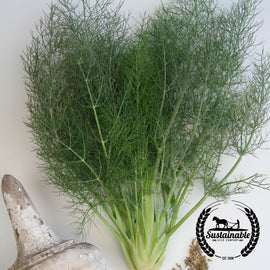 Organic Florence Fennel Herb Seeds