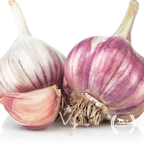 Organic Romanian Red Garlic Seeds - Non-GMO