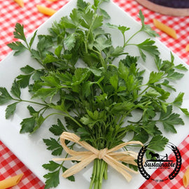 Parsley, Giant Dark Green Italian Herb Seeds