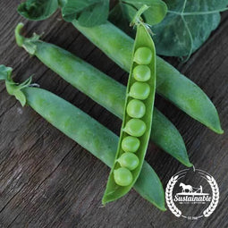 Organic Green Arrow Pea Seeds