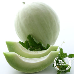 Green Flesh Honeydew Melon Seeds