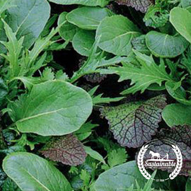 Organic Braising Greens Seeds - Non-GMO