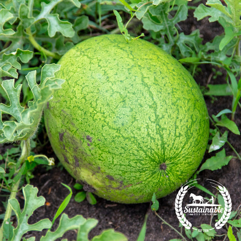 Greybelle Watermelon Seeds - Non-GMO