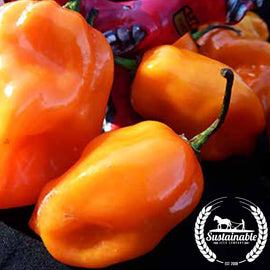 Organic Habanero Orange Pepper Seeds