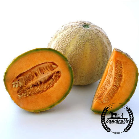 Honey Rock Melon Seeds