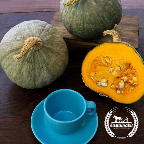Hubbard Baby Blue Squash Seeds