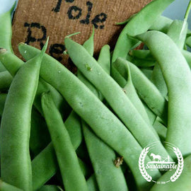 Organic Kentucky Wonder Pole Bean Seeds