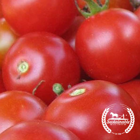 Organic Large Red Cherry Tomato Seeds