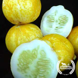 Organic Lemon Cucumber Seeds