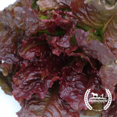 Organic Flame Lettuce Seeds