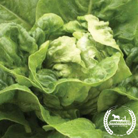Organic Little Gem Lettuce Seeds