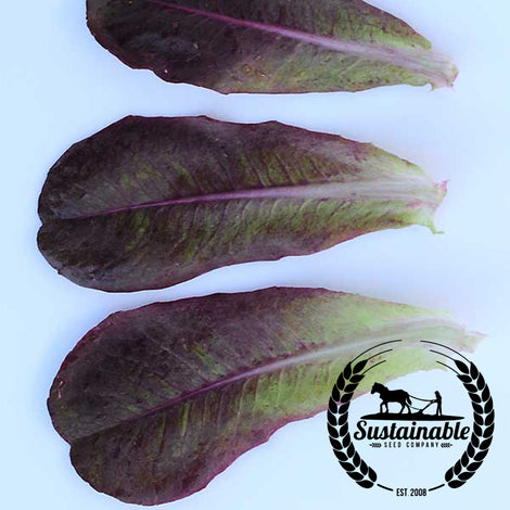 Rouge d'Hiver Lettuce Seeds - Non-GMO