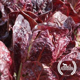 Super Red Romaine Lettuce Garden Seeds