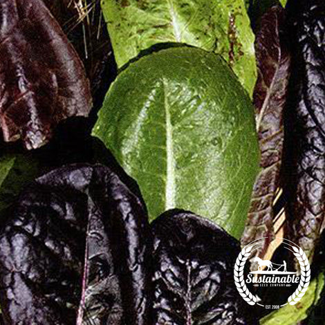 Organic Tricolor Romaine Lettuce Blend Seeds