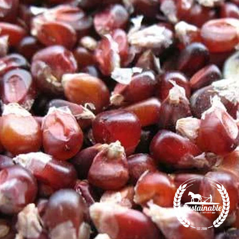 Little Indian Popcorn Seeds