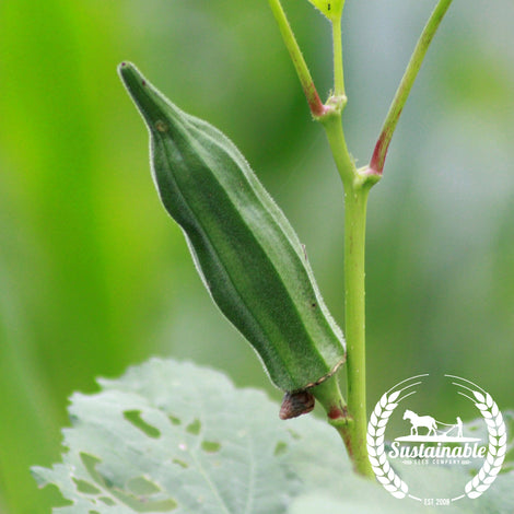 Louisiana Short Pod Okra Seeds - Non-GMO