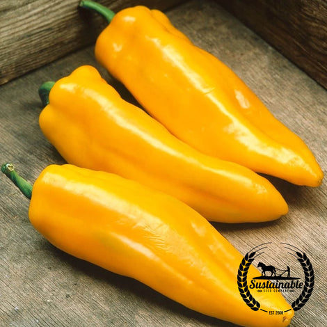 Mama Mia Giallo F1 Hybrid Pepper Seeds