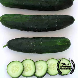 Marketmore 80 Cucumber Seeds