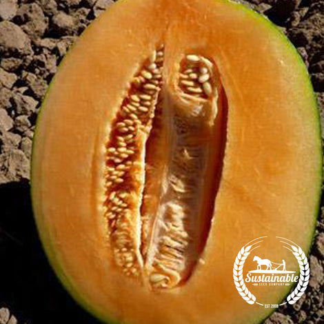 Emerald Green Gem Melon Seeds