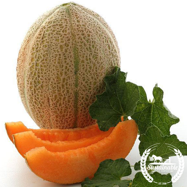 Melons Sustainableseedco