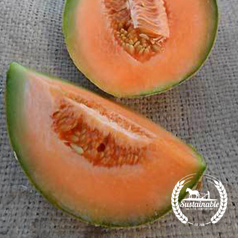 Organic Sierra Gold Melon Seeds