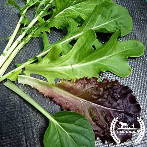 Organic Mesclun Mixed Greens Seeds