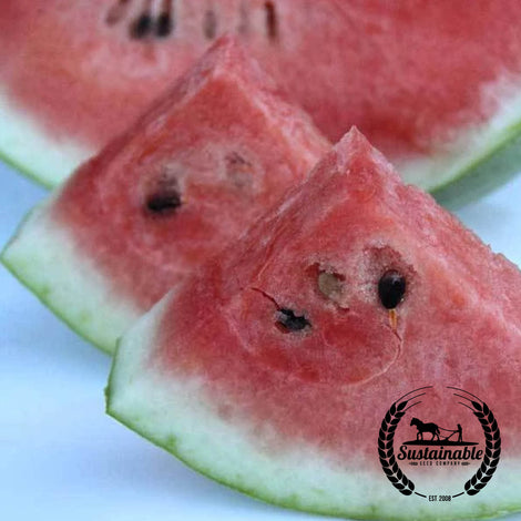 Mickylee Watermelon Seeds
