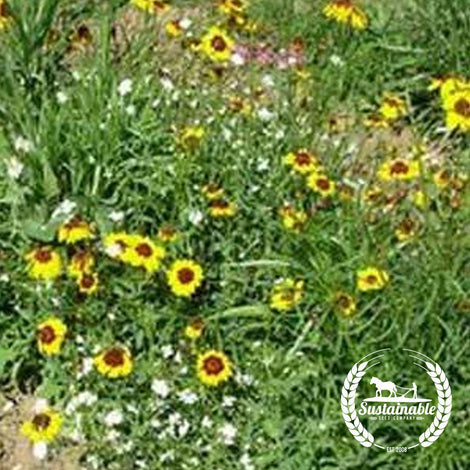 Midwestern Mix Flower Seeds