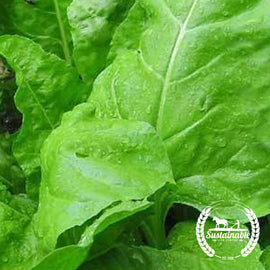 Monstrueux De Viroflay Spinach Seeds