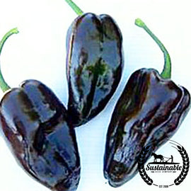 Mulato Isleno Pepper Seeds