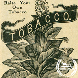 Banana Leaf Tobacco Seeds