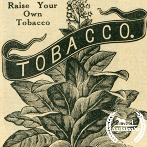 Organic Kelly Burley Tobacco Seeds - Non-GMO