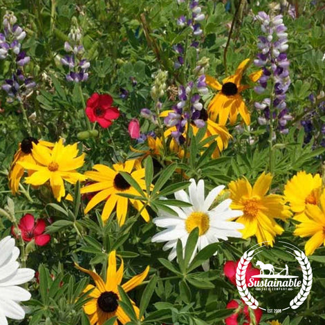 Northwest Wildflower Mix Seeds