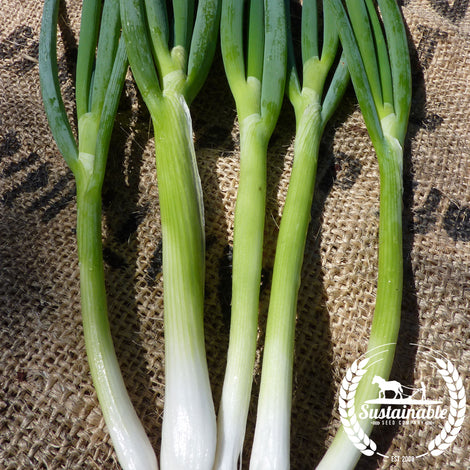 Evergreen White Bunching Nebuka Onions Seeds